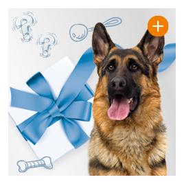 Überraschungspaket für Hunde
