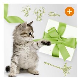 Überraschungspaket mit Spielzeug für Katzen